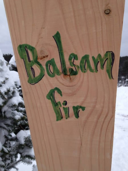 Balsam Fir Sign