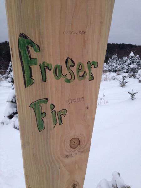Fraser Fir Sign