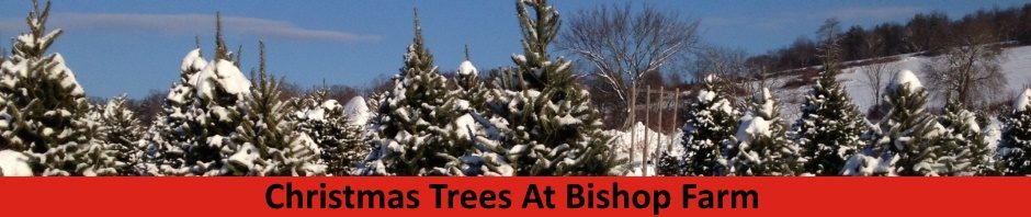 Christmas In Vermont.Real Christmas Trees Vermont Christmas Trees